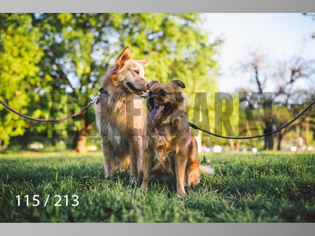 Dogs Rest WM-115.jpg