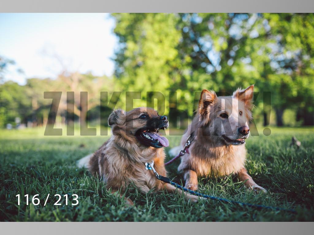 Dogs Rest WM-116.jpg