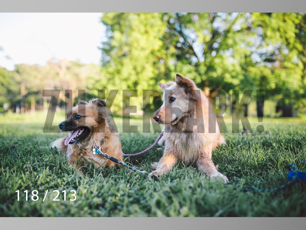 Dogs Rest WM-118.jpg
