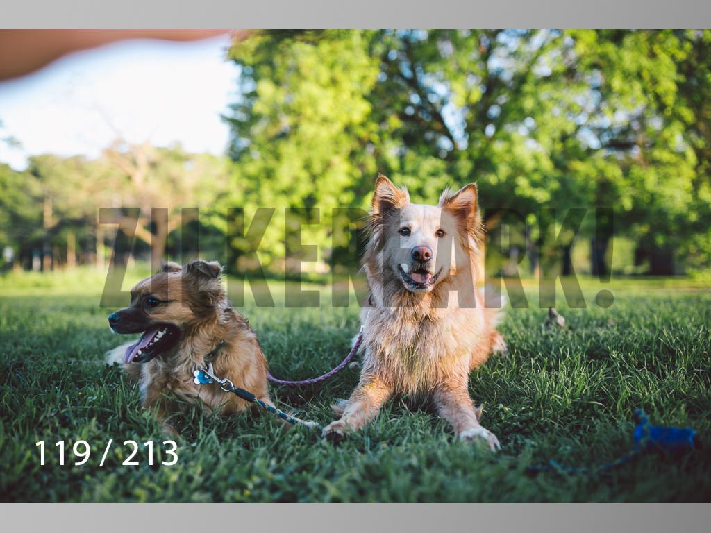 Dogs Rest WM-119.jpg
