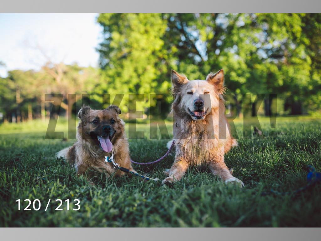 Dogs Rest WM-120.jpg