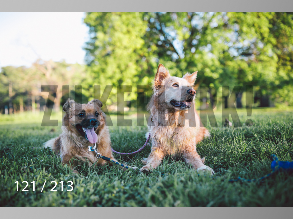 Dogs Rest WM-121.jpg