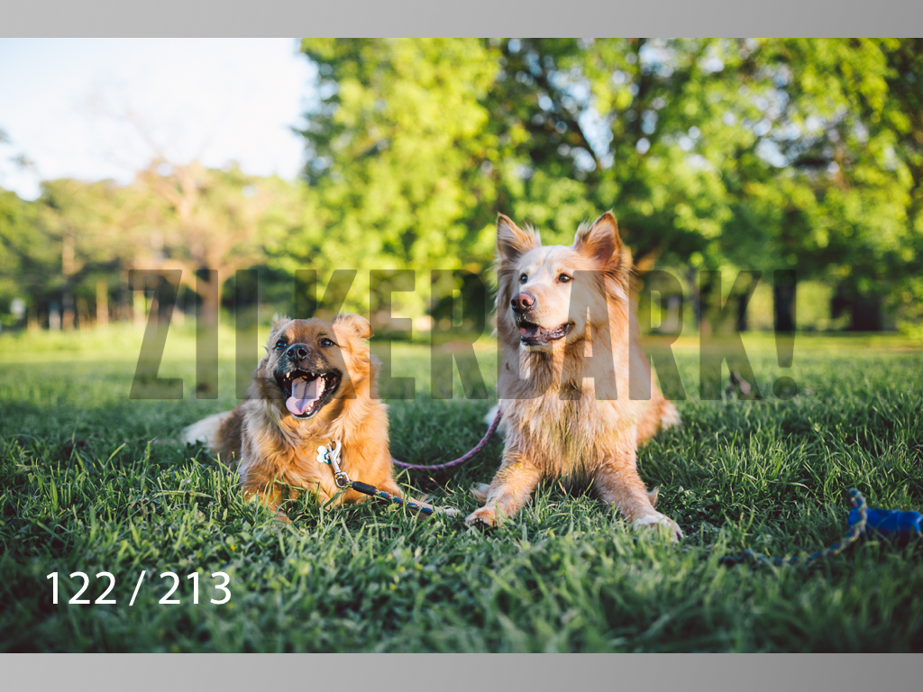 Dogs Rest WM-122.jpg