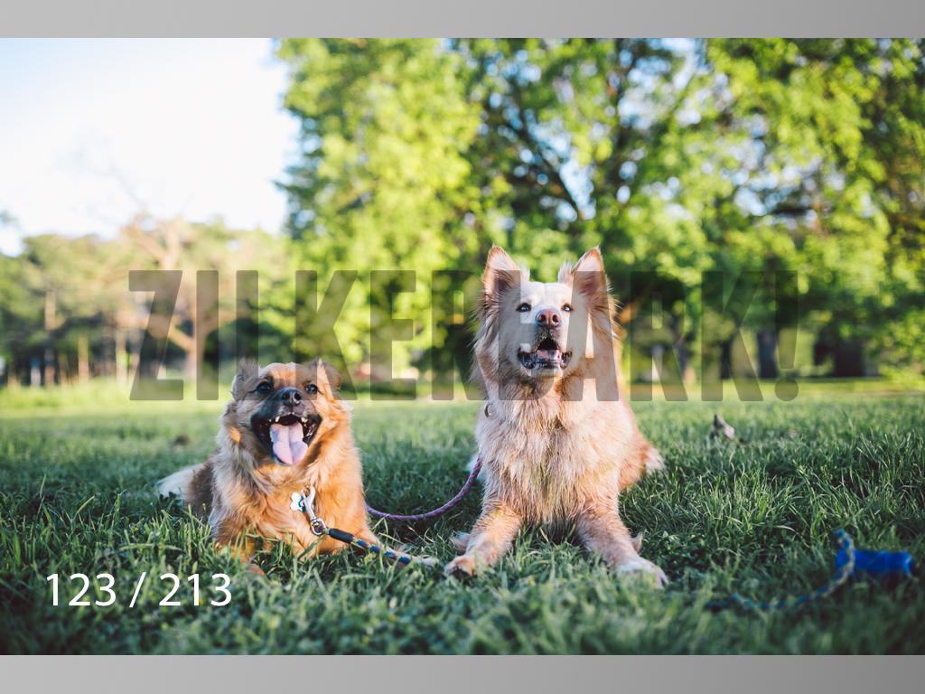Dogs Rest WM-123.jpg