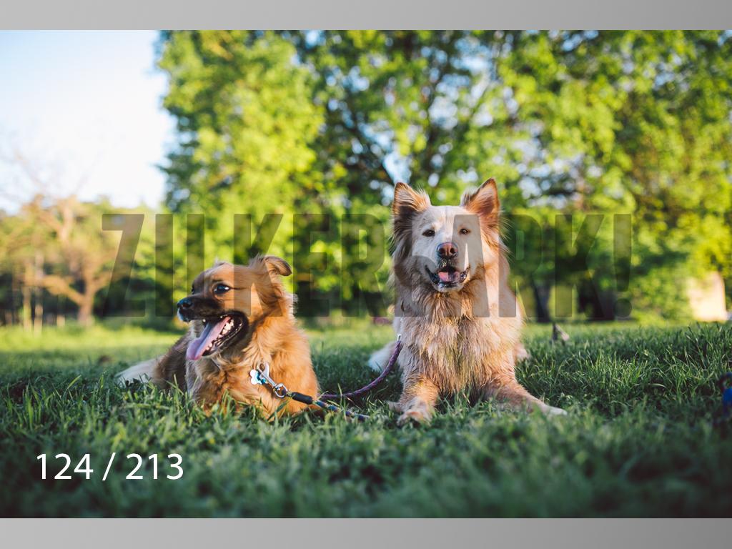 Dogs Rest WM-124.jpg