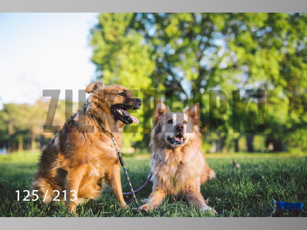 Dogs Rest WM-125.jpg