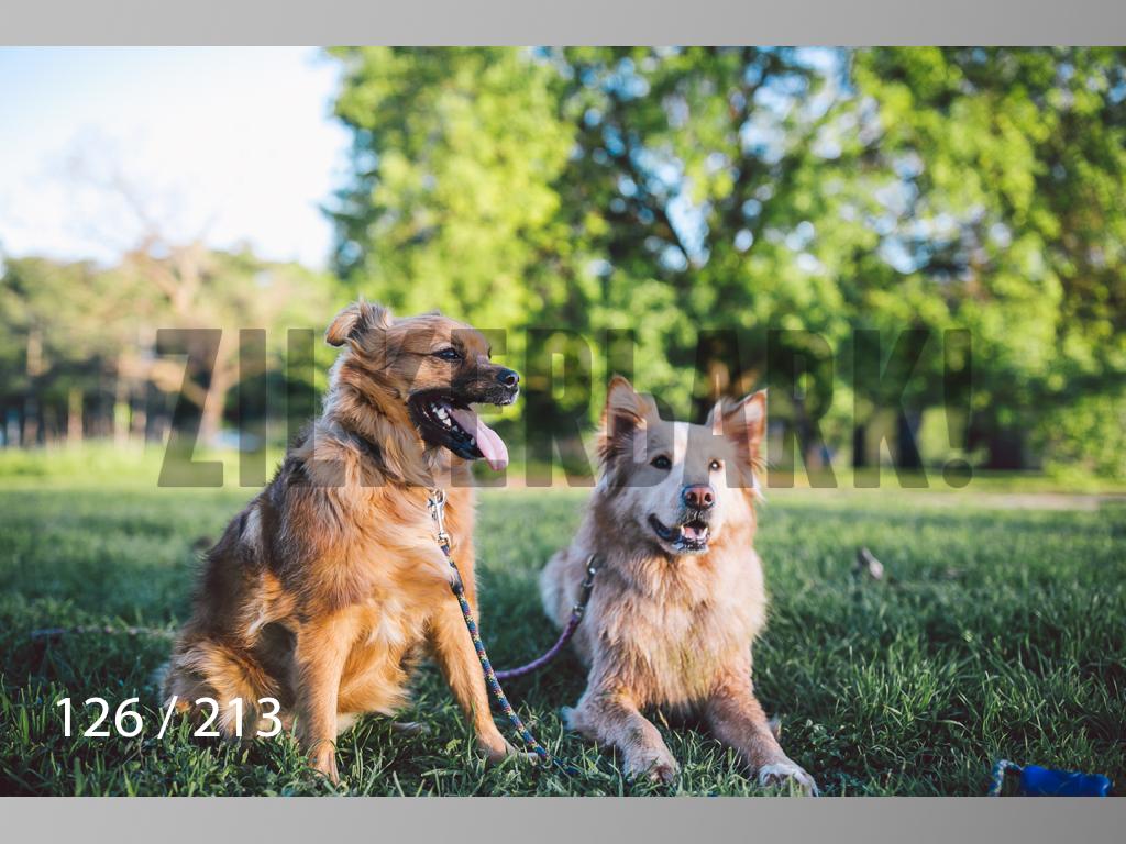 Dogs Rest WM-126.jpg
