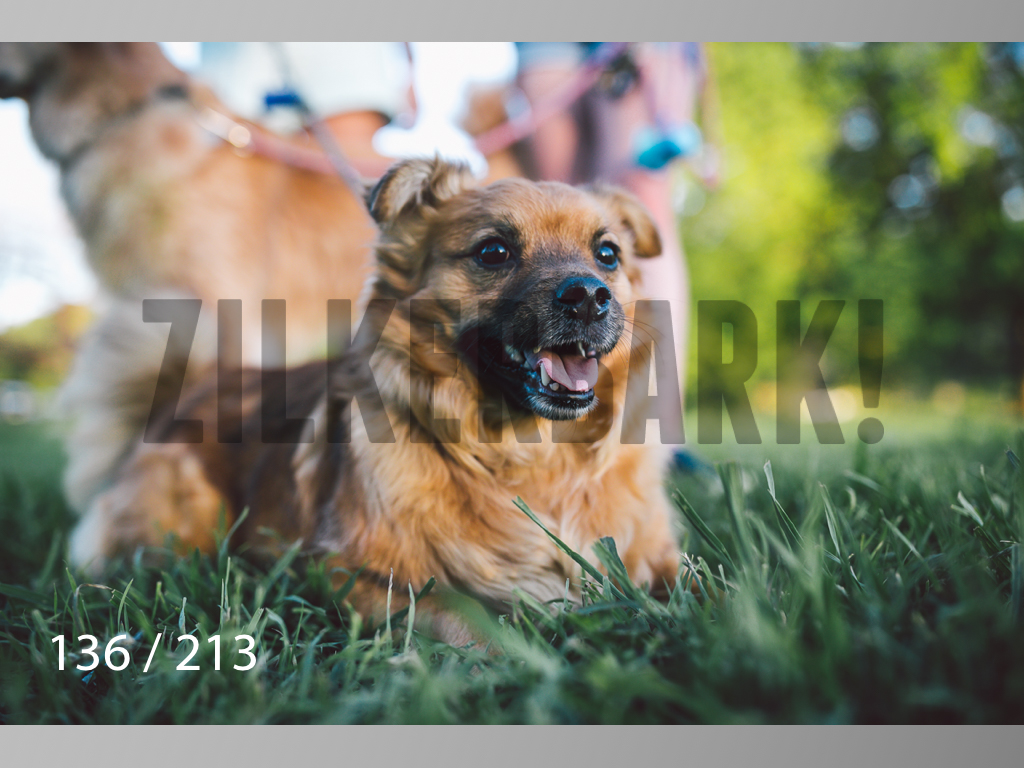 Dogs Rest WM-136.jpg