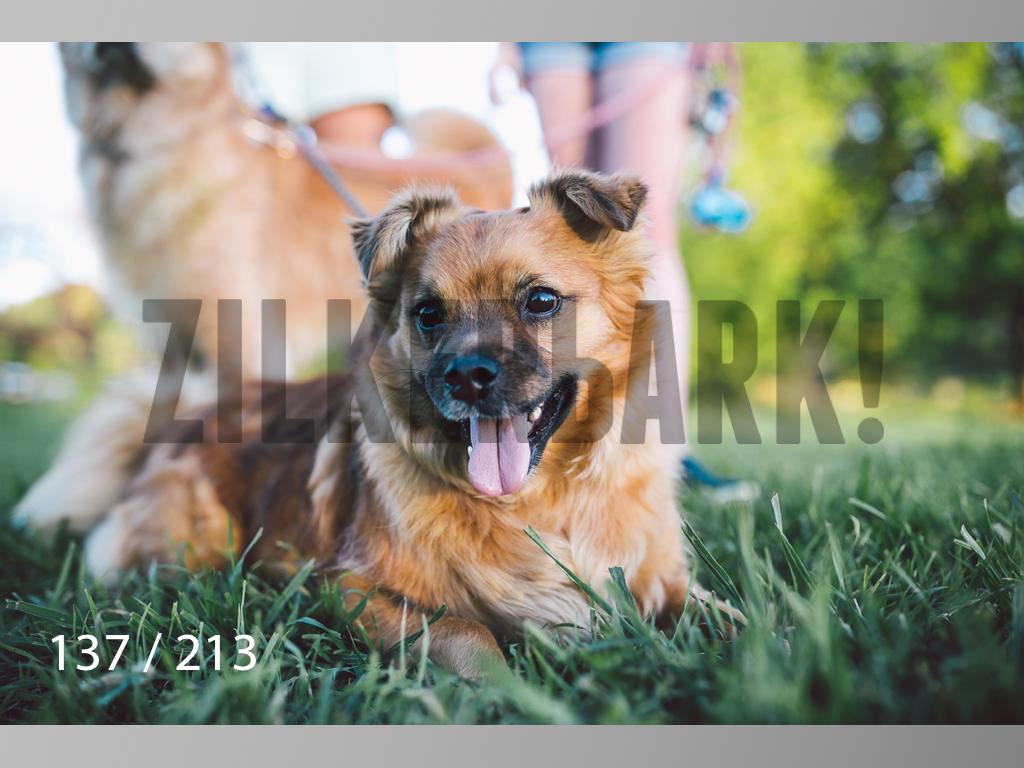 Dogs Rest WM-137.jpg