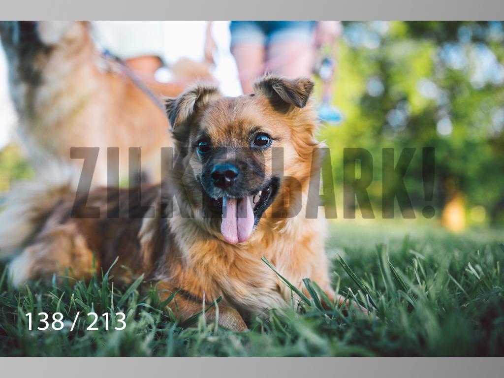 Dogs Rest WM-138.jpg