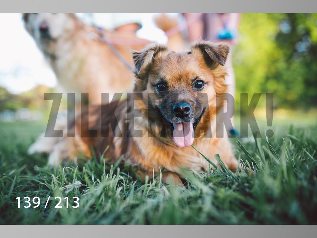 Dogs Rest WM-139.jpg