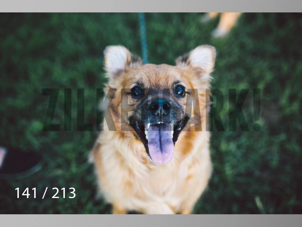 Dogs Rest WM-141.jpg