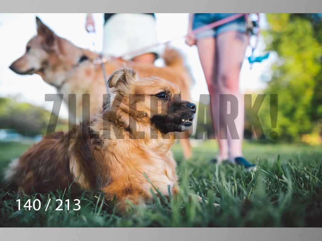 Dogs Rest WM-140.jpg