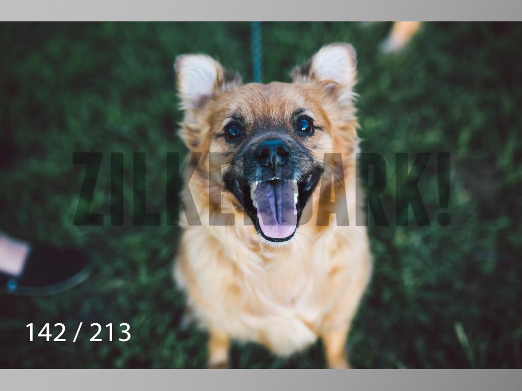 Dogs Rest WM-142.jpg