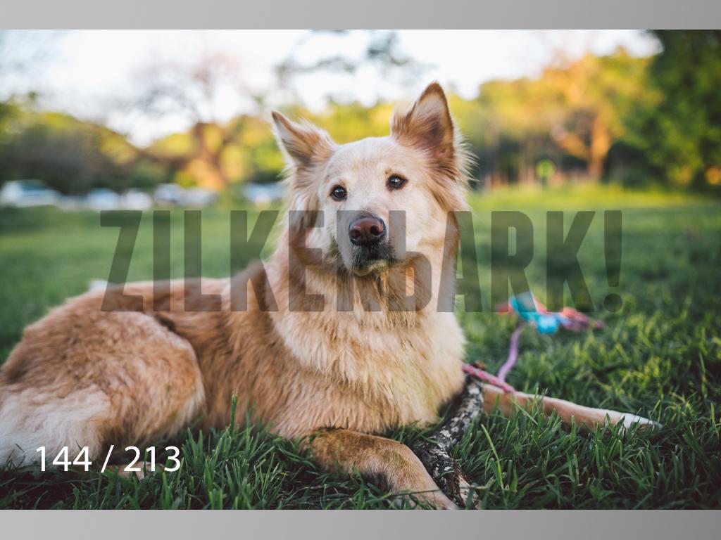 Dogs Rest WM-144.jpg