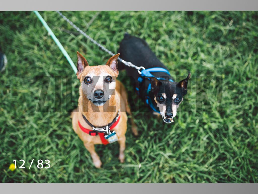 Rocky and Rusty-12.jpg