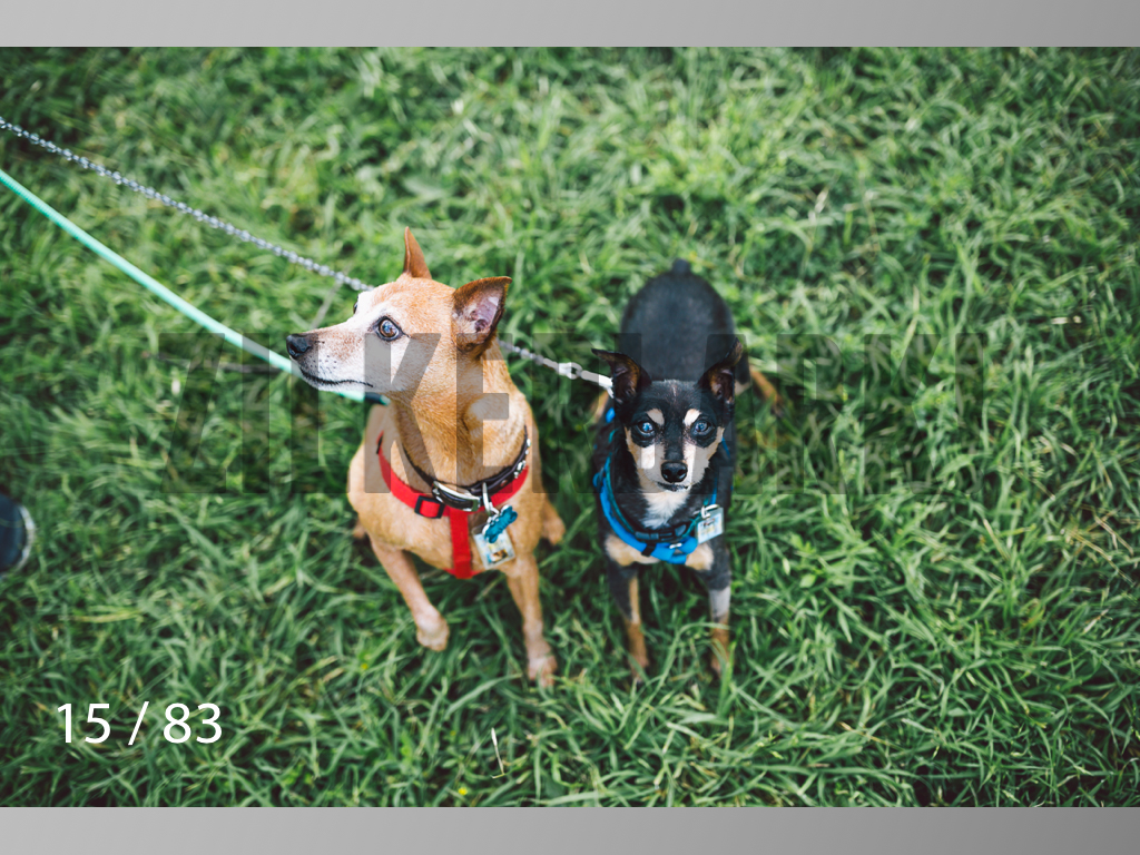 Rocky and Rusty-15.jpg