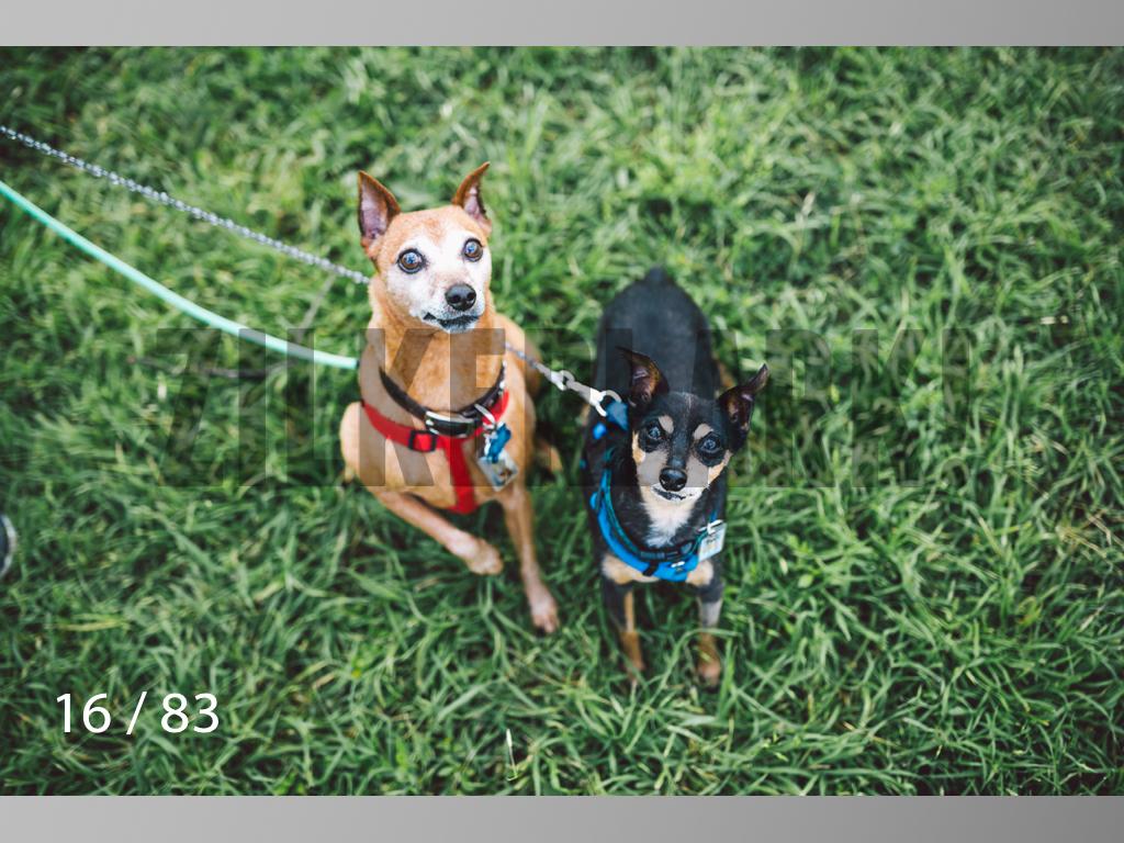 Rocky and Rusty-16.jpg
