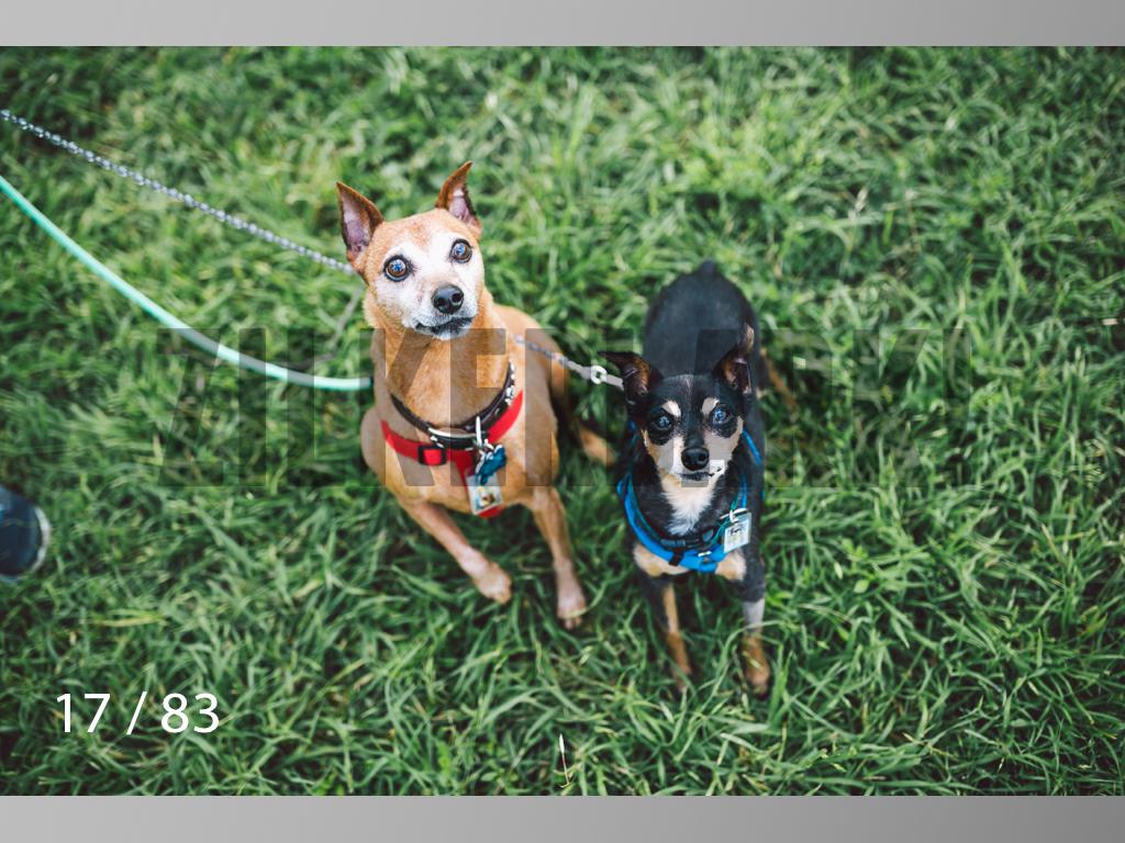 Rocky and Rusty-17.jpg