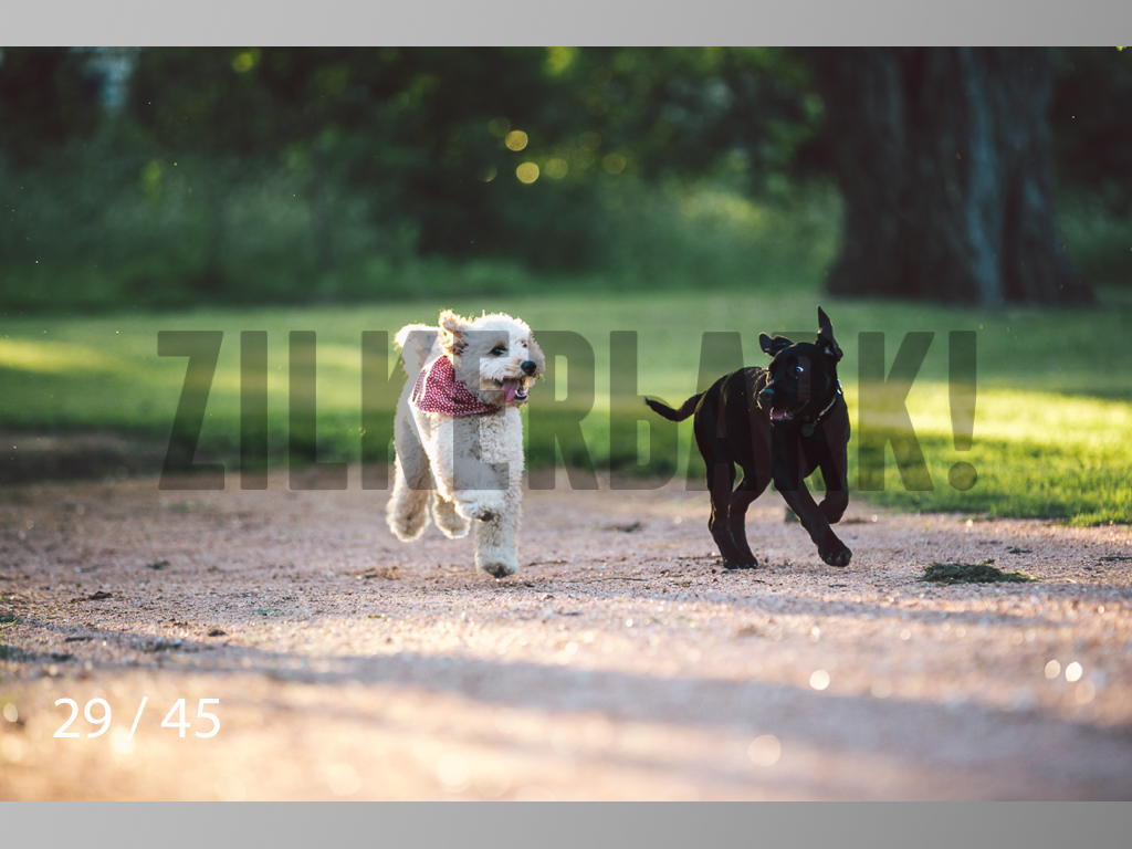 Shelby and Fenway-29.jpg
