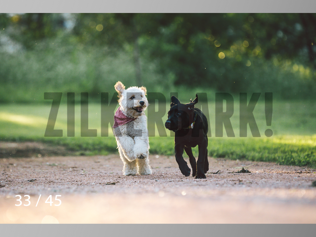 Shelby and Fenway-33.jpg