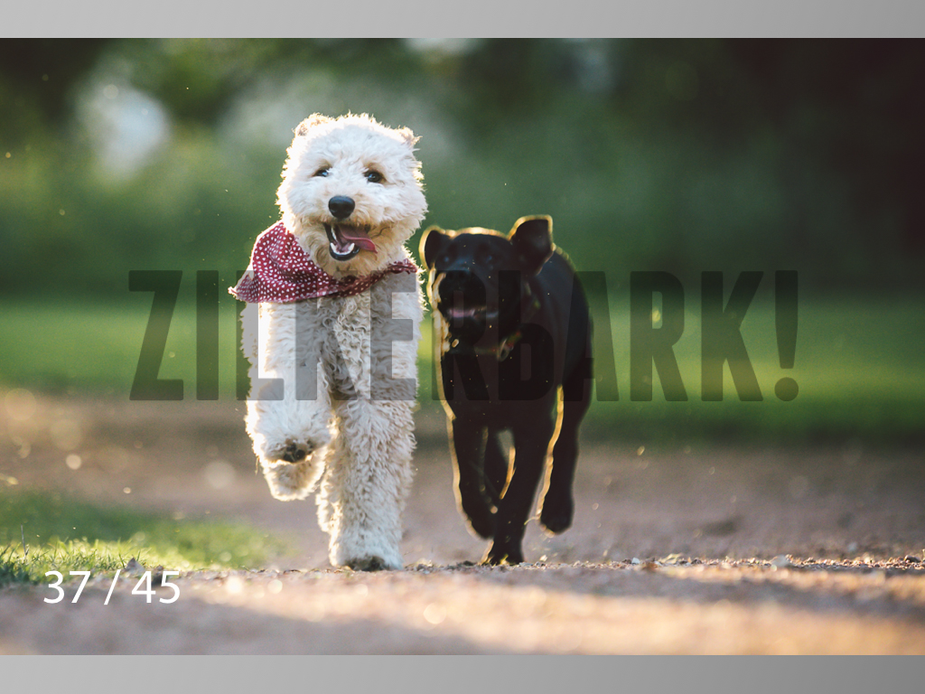 Shelby and Fenway-37.jpg