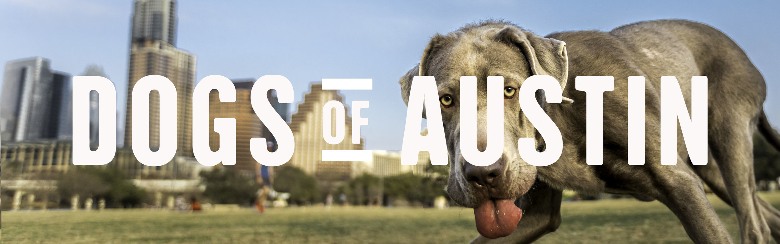 Dogs of Austin Cover web.jpg