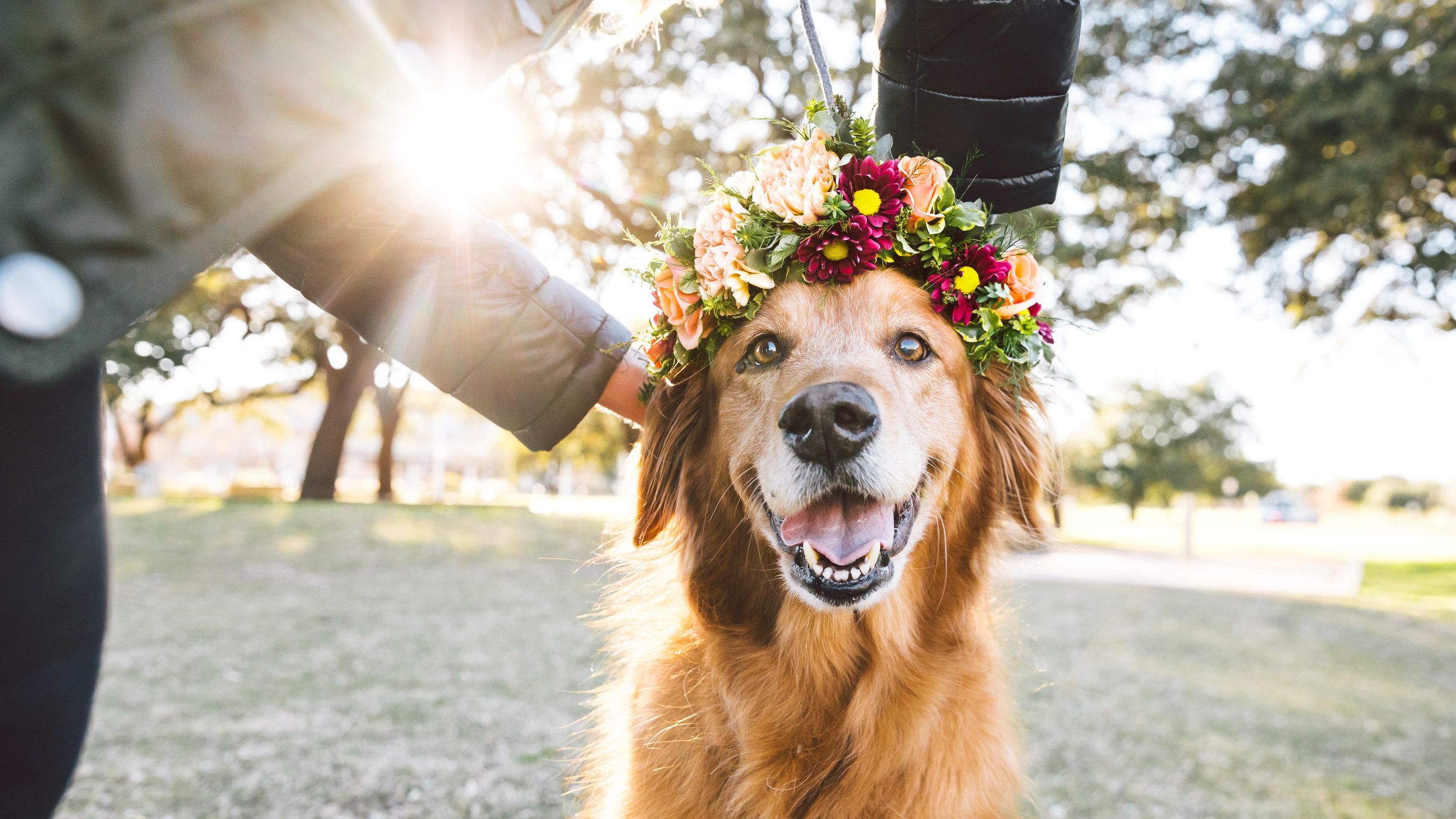 ZilkerBark Dog Flower Crown Senior Sessions Portrait Photoshoot