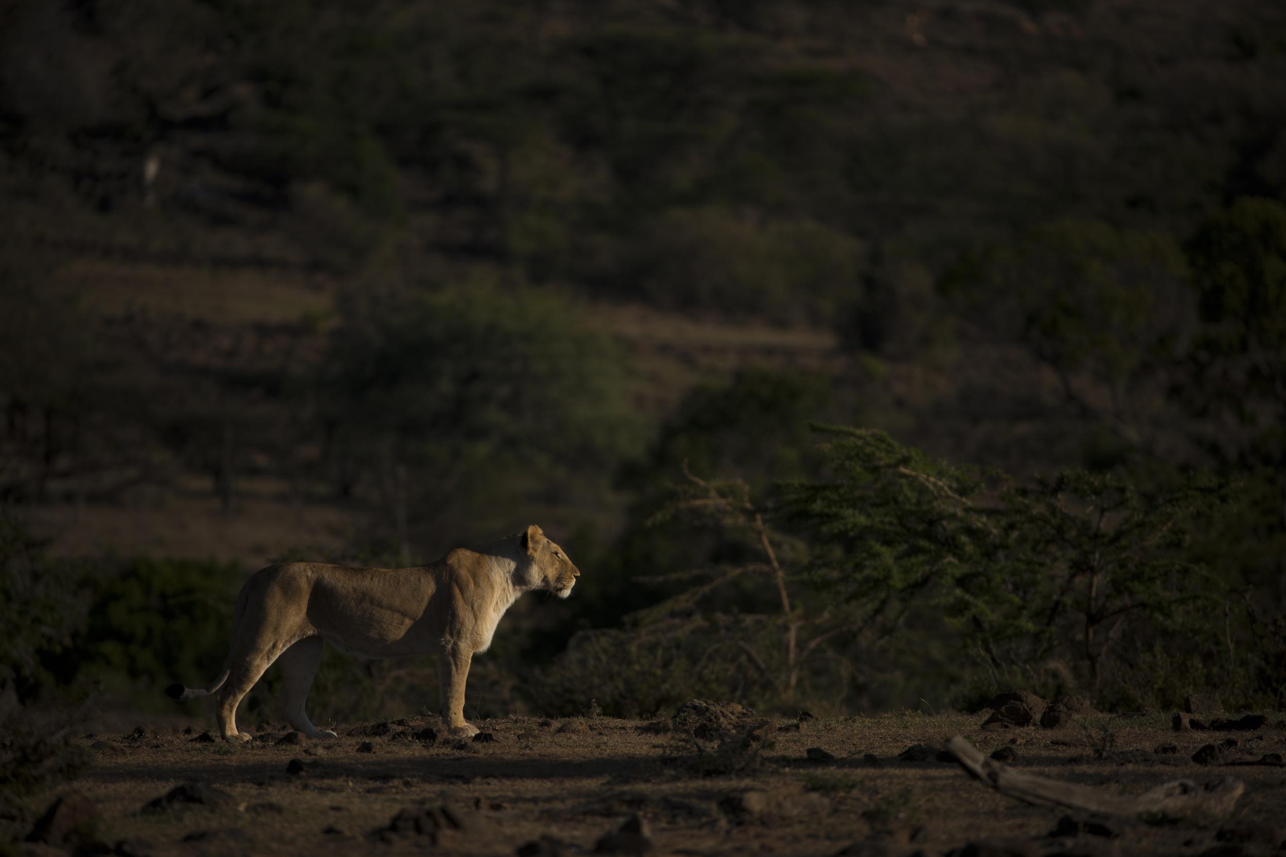 Mara Plains_Kenya_2014_Beverly Joubert20141216_3247.jpg