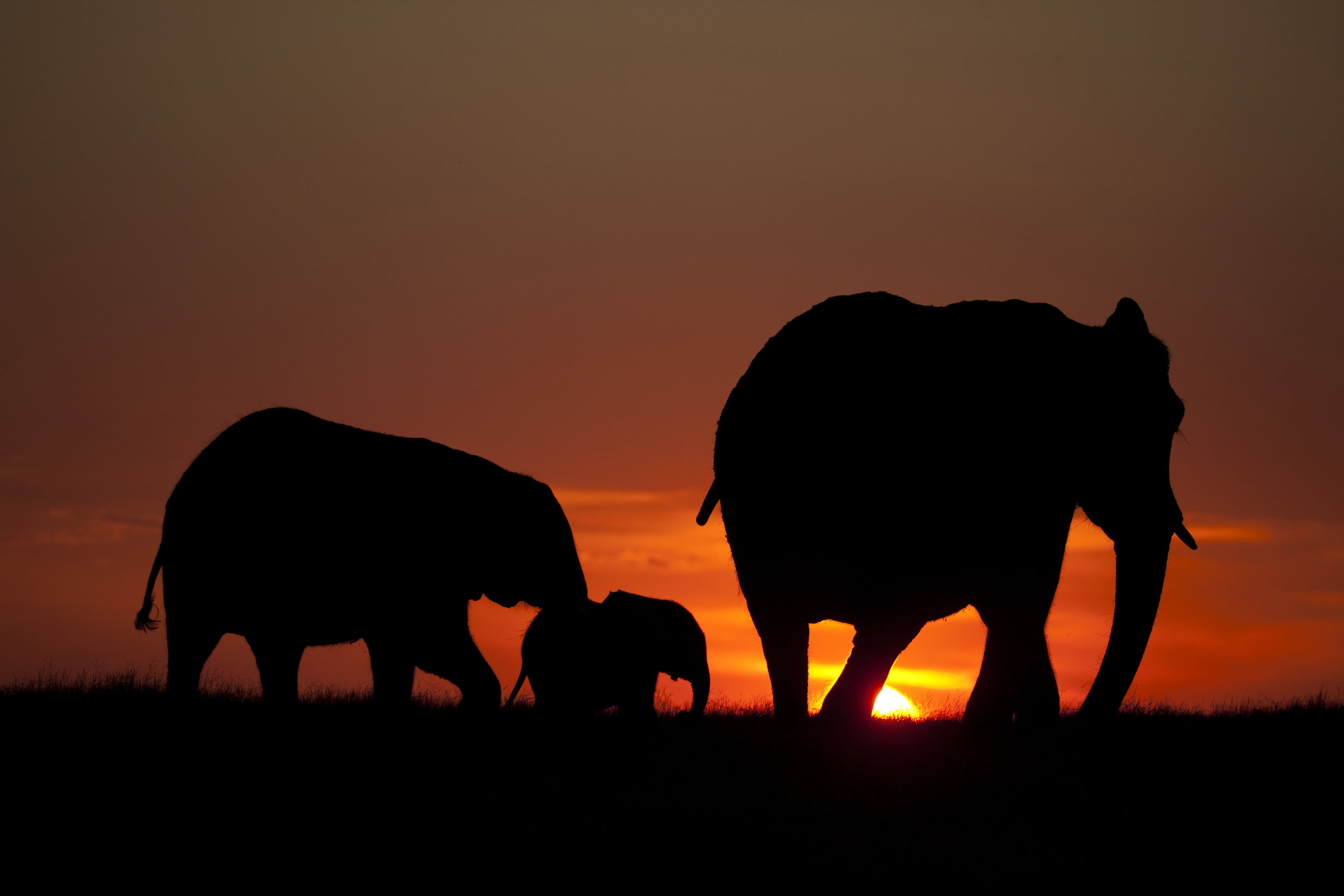 Duba plains_Botswana Jan 2014_Beverly Joubert20150113_3137.jpg