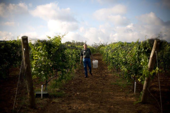 20100804 168A Singing Water Vineyard.JPG