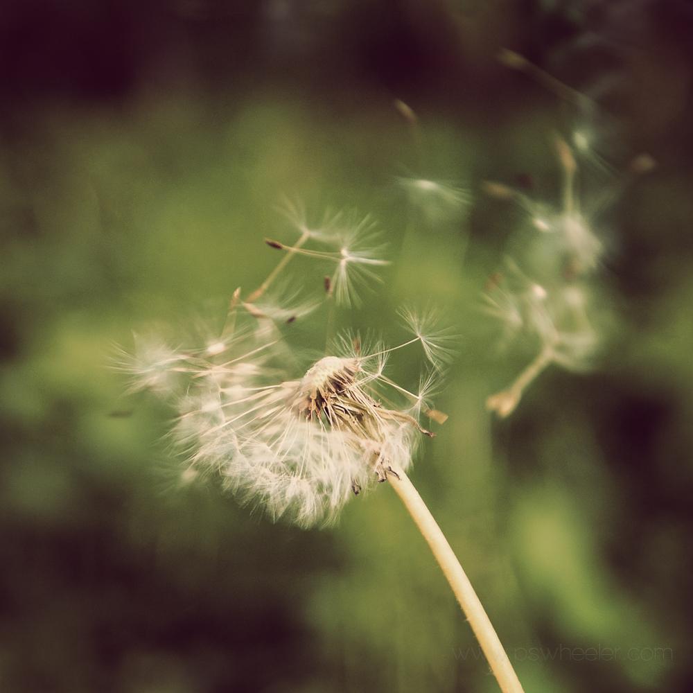 © www.pswheeler.com-20.jpg