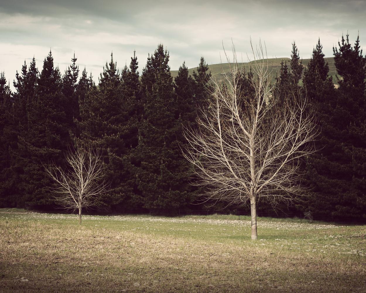 © www.pswheeler.com-46.jpg