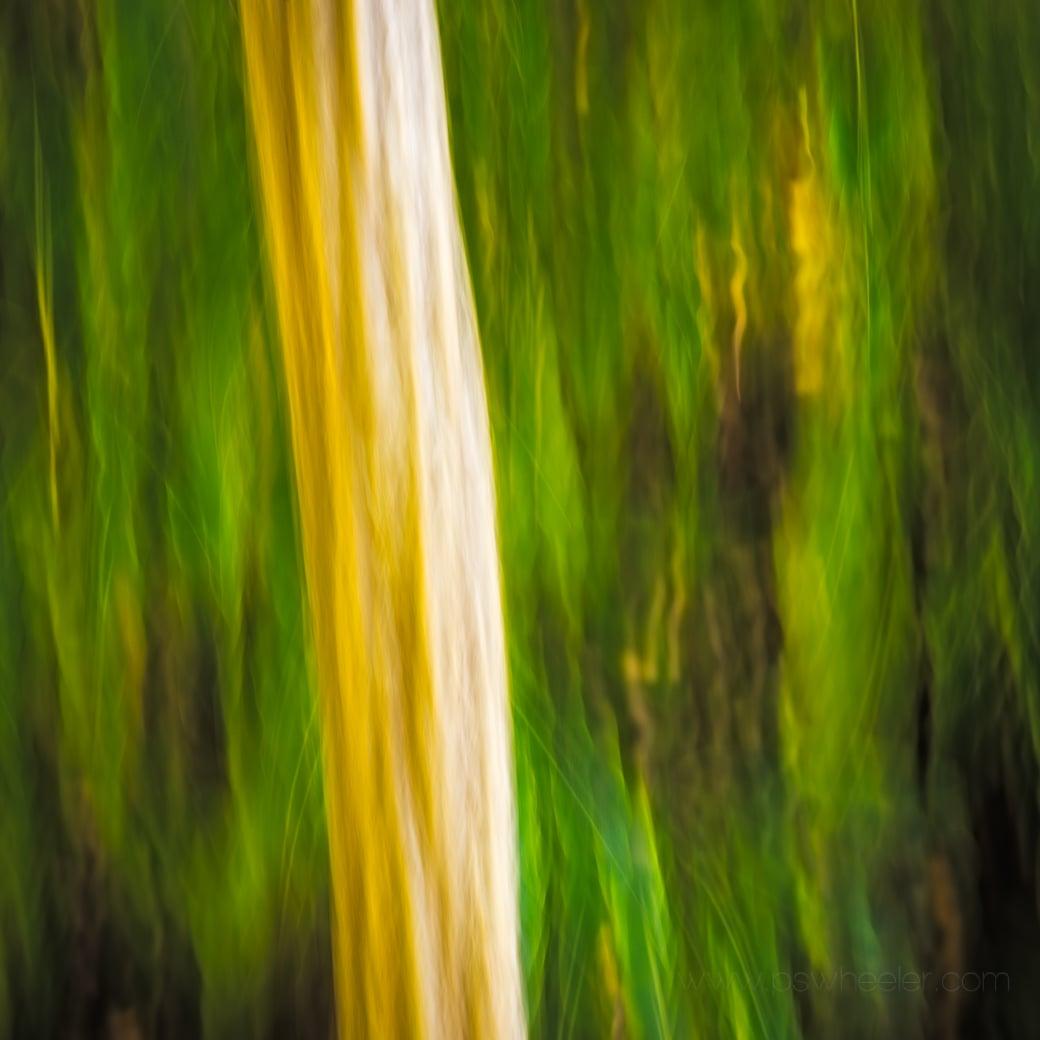 © www.pswheeler.com-47.jpg