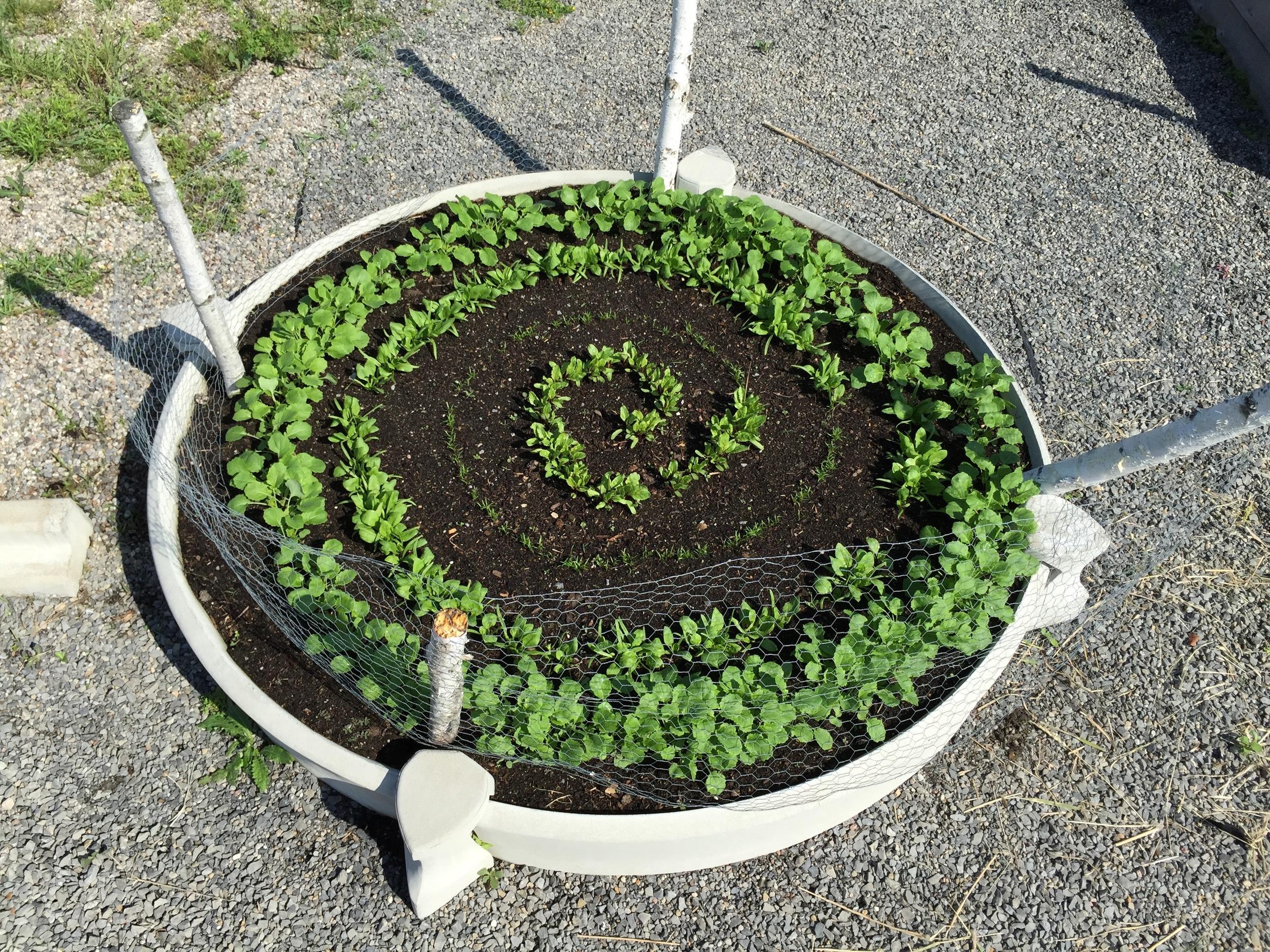 Various carrots, lettuce, kale, beets..