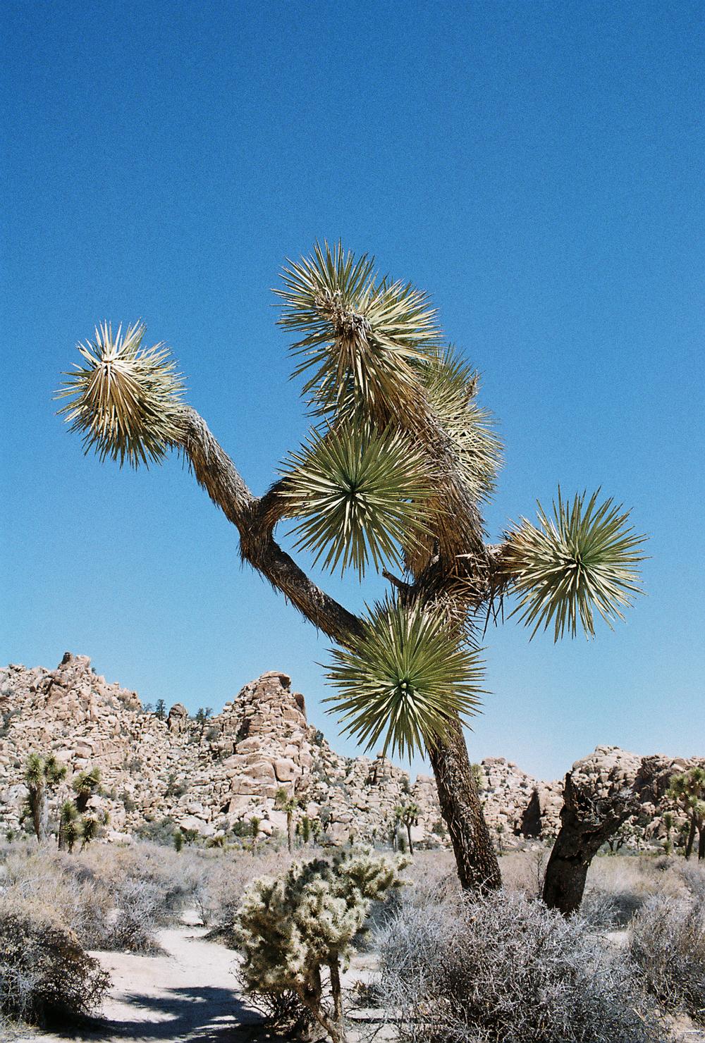 03-yucca-web.jpg