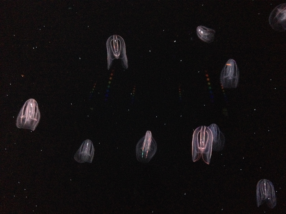 05-jellyfish04.jpeg