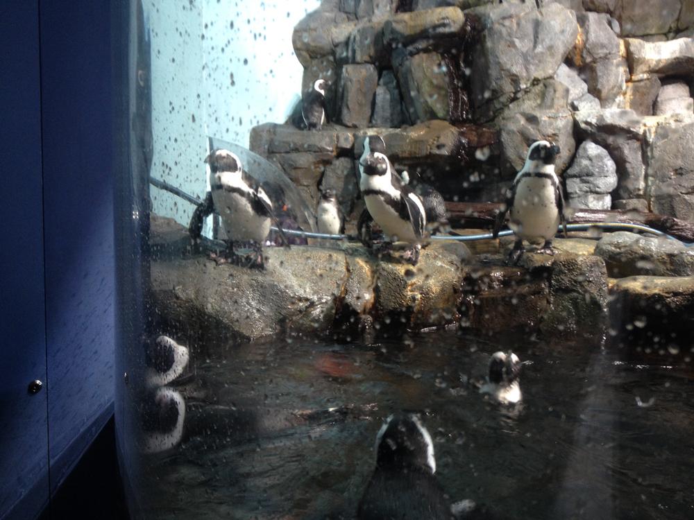 07-penguins.jpeg