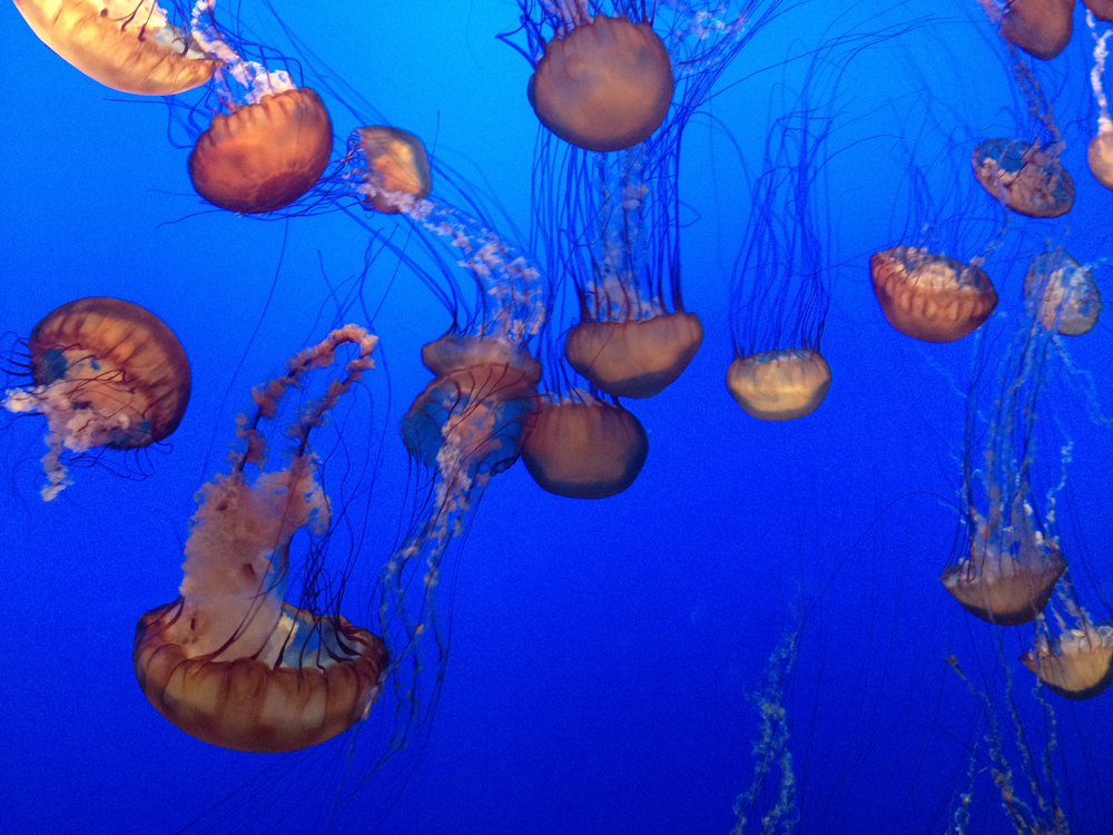 04-jellyfish01.jpeg