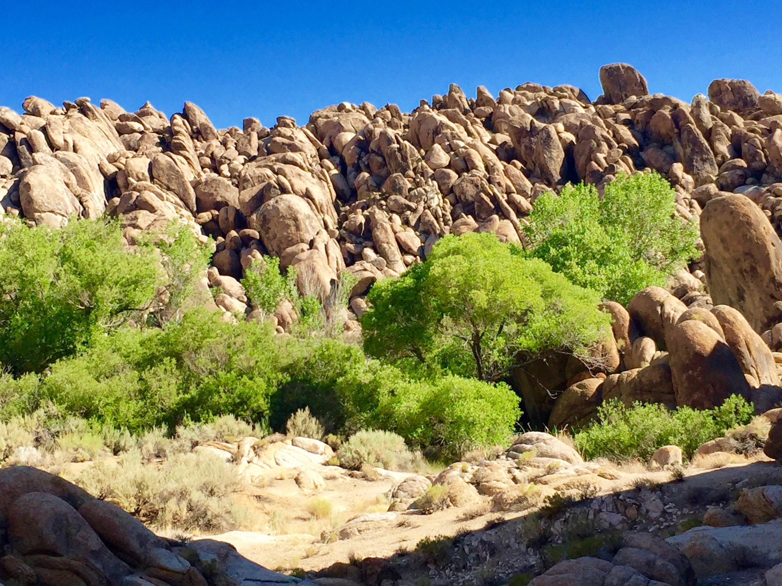 Some times a walk meanders towards the edge of the Alabama Hills. Photograph by Christopher Langley