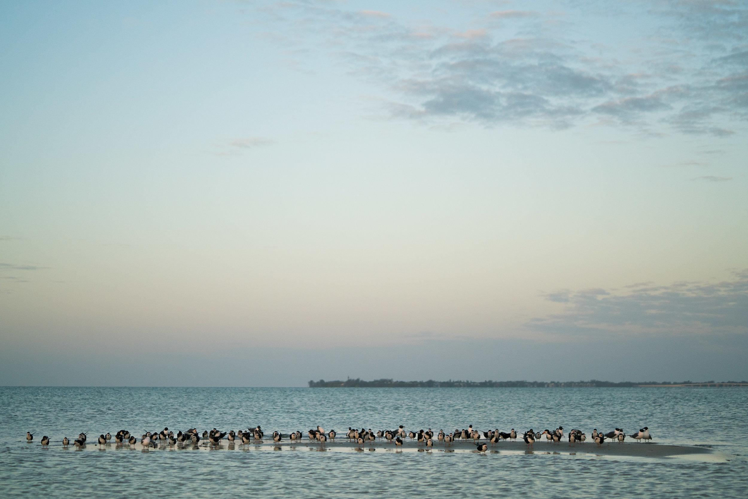 Florida-00676.jpg