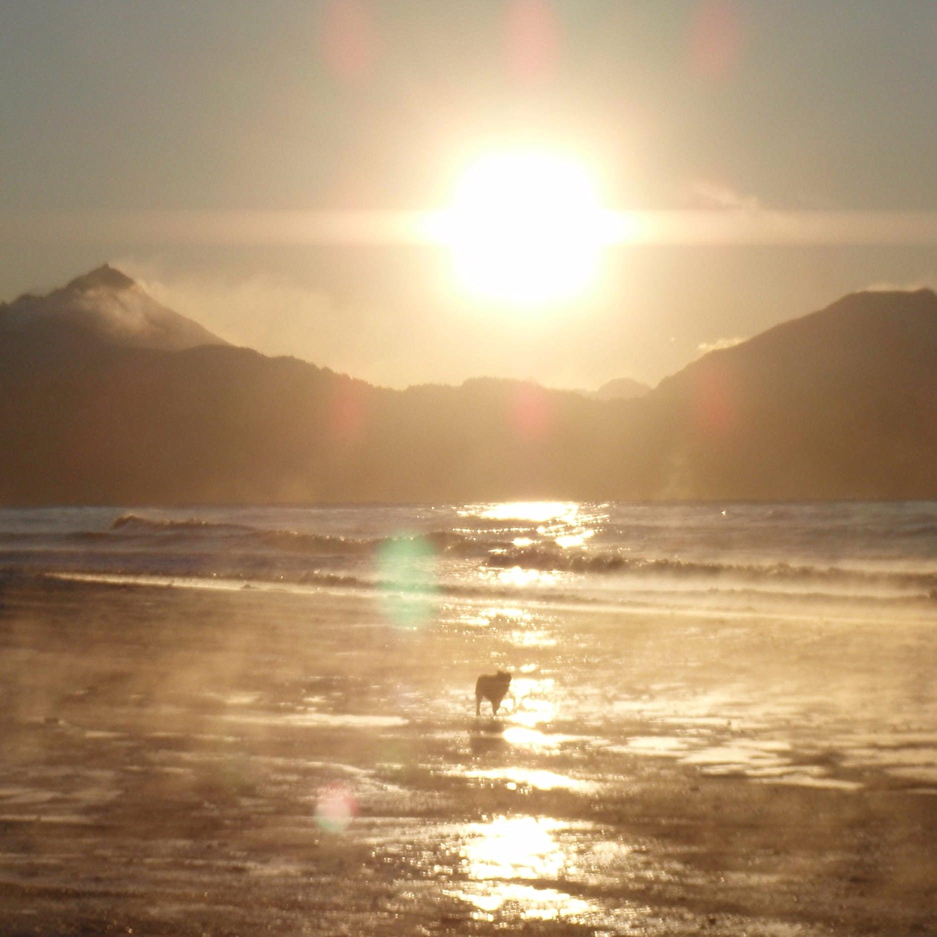 Dog at the beach during sunrise in Homer Alaska