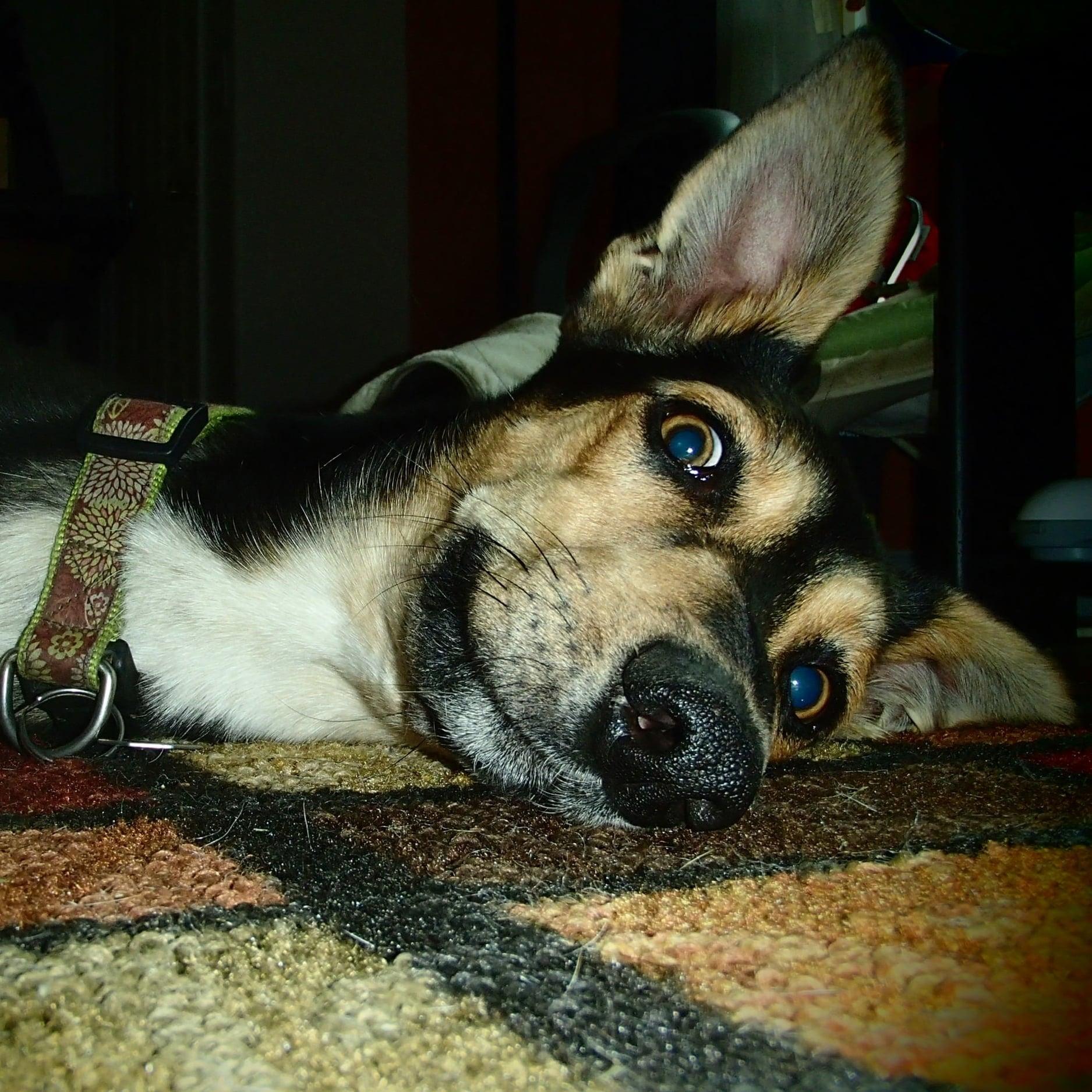 Eisen Snow best dog in the world