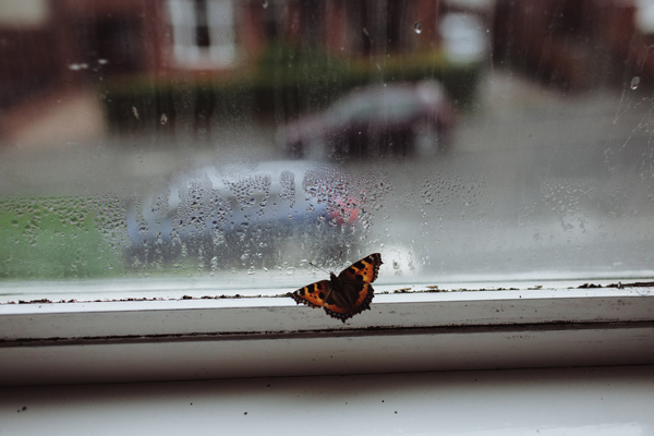 British-Butterflies-2.jpg