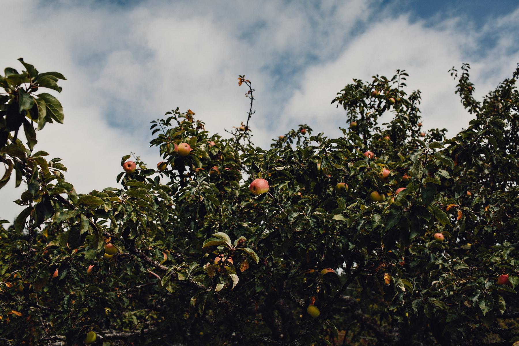 Glenrosa-Farms-Wedding-Photos-0205.jpg