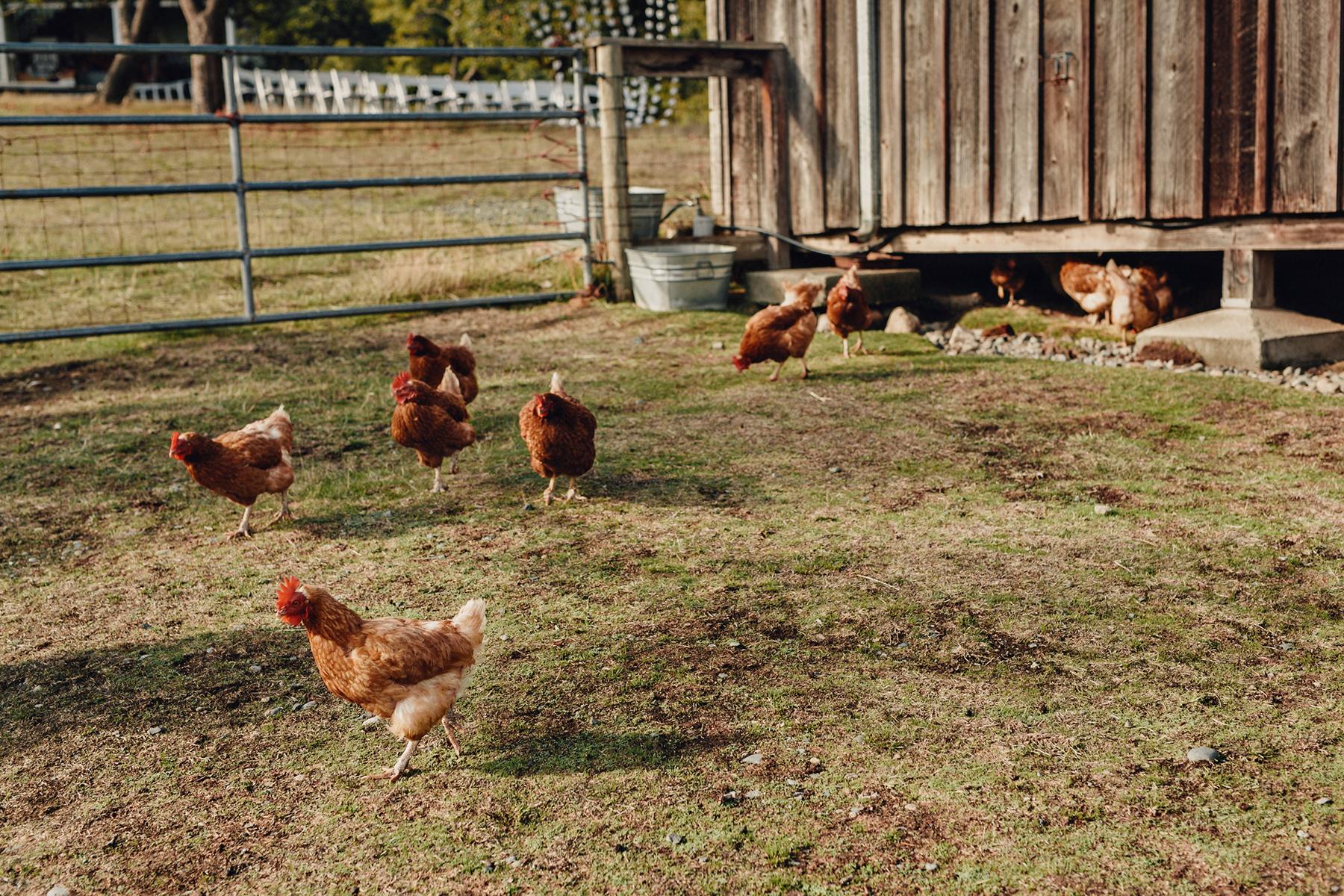 Glenrosa-Farms-Wedding-Photos-0214.jpg