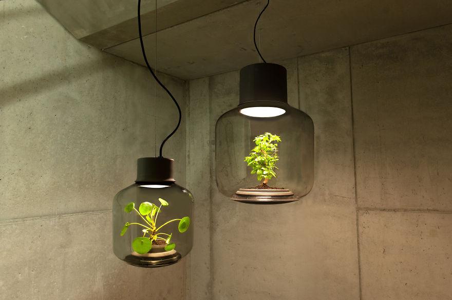 Plant Lamps 1.jpg