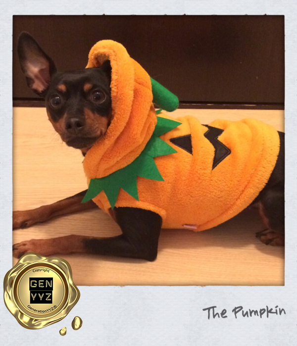 """Pampered Pet: Don't Be a """"Hallo-weenie"""", Dress Up Like CoCo-beanie - Image 1"""