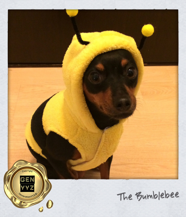 """Pampered Pet: Don't Be a """"Hallo-weenie"""", Dress Up Like CoCo-beanie - Image 2"""