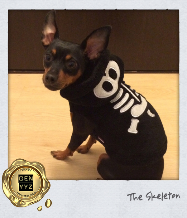 """Pampered Pet: Don't Be a """"Hallo-weenie"""", Dress Up Like CoCo-beanie - Image 3"""